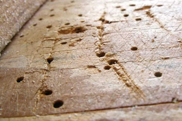 Traitement insecticide et fongicide pour bois