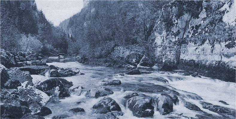 Nature Mauler 1919